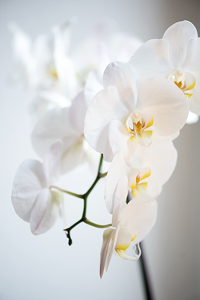 Orchidee in der Physiotherapie Praxis